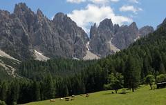 Scenario (lincerosso) Tags: dolomiti montagna spaltiditoro dolomitidelcadore prditoro scenario alpeggio estate luce bellezza armonia