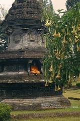 Bali, Bedugul Temple (blauepics) Tags: indonesien indonesia indonesian indonesische bali island bedugul hindu religion temple tempel tower turm pagoda pagode buddha statue stone stein plant pflanze flower blume blhen flowering nature natur 1991