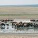 Mais de 300 cavalos juntos