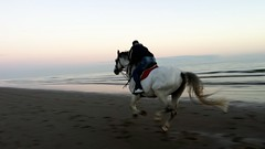 Oasi di Brussa. Laguna di Venezia (cesco_chi) Tags: sunset sea italy beach italia tramonto mare italu running riding venezia cavallo spiaggia adriatico oasi caorle hourse lagun brussa venecy oasidibrussa laguanadivenezia