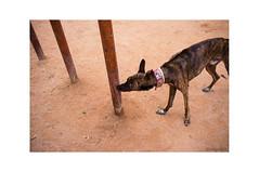 Territorios (J. Garcia2011) Tags: street dog color valencia streetphotography perro urbana urbano callejera comunidadvalenciana fujix100
