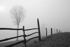 la vie en gris (anita.niza) Tags: winter fog nebel hiver melancholy brouillard emmental irgendwo melancholie