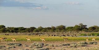 Botswana Hunting Safari 45