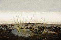 DSC_0135 (Putneypics) Tags: winter snow ice stream vermont january freeze brook melt thaw putneypics