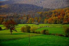 _DSC7420 (andoni.guridi) Tags: autumn fall spain otoño navarra 2014 basaburua