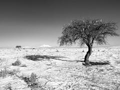 mt.Erciyes@Cappadocia.tr (Tilemachos Papadopoulos) Tags: winter snow turkey cappadocia anatolia kapadokya qoq erciyes asiaminor argaios antitaurus