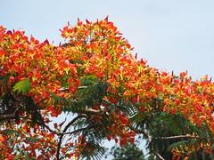 Vida. (dryellepaz) Tags: nature natureza vida árvore photograpy suavidade romantismo arpuro