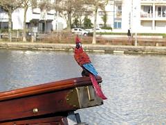 Papagai (Jeanne Nabais) Tags: water boat canal eau bateaux perroquet papagai