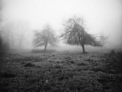 Deux arbres (steph20_2) Tags: winter bw white black tree monochrome lumix countryside noir noiretblanc hiver ngc panasonic g5 prairie monochrom campagne arbre blanc brouillard brume picardie pré m43 skanchelli