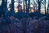 (starsurvivor) Tags: winter cold nature cemetery hamburg ohlsdorf interno7