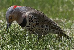 Flicker 1 (Largeguy1) Tags: red macro green bird nature canon ii 5d approved vmark