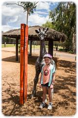 Eleanor Measuring up to a Baby Giraffe (Craig Jewell Photography) Tags: zoo australia nsw newsouthwales f22 taronga dubbo westernplainszoo 2015 22mm iso640 westernplains ¹⁄₃₀sec ‒2ev canoneosm efm22mmf2stm 27°2728s153°29e filename20150523224740mg2011cr2