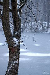 Winter Scenery IV (Proper Photography) Tags: trees winter snow cold ice frozen january freezing winterweather waterscape 2015 winterscenery january2015 winterwaterscape