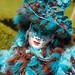 "Costumés_StPietersLeeuw_2014-54 • <a style=""font-size:0.8em;"" href=""http://www.flickr.com/photos/100070713@N08/16286009860/"" target=""_blank"">View on Flickr</a>"