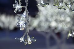 Arbustes de cristal - 1 (Patrice StG) Tags: winter light snow evening bokeh lumière hiver québec carnaval shrub soir arbuste d5100