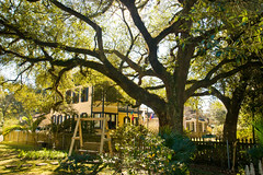 IMG_3331 (New Orleans Lady) Tags: usa oak lafayette townhouse neworleans louisana givens frenchlouisianacajun louisianacajuncopyright louisianalafayetteparish treefrenchlouisianacajunlouisianacajuncopyrightneworleanslouisanausa