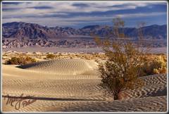 Ripples (MikeJonesPhoto) Tags: california ca nature landscape death photographer ns dunes scenic professional mesquite valley 1214 1106 mikejonesphoto smithsouthwestern wwwmikejonesphotocom