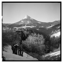 chartreuse_yashica_400-10 (D_M_J) Tags: winter bw white mountain snow black france 120 6x6 tlr film monochrome saint st yellow square de lens french landscape mono reflex pierre chartreuse twin peak mat filter 400 roll plus epson hp5 medium format ilford yashica 80mm chamechaude saintpierredechartreuse v850
