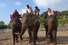 "Elephant Riding • <a style=""font-size:0.8em;"" href=""http://www.flickr.com/photos/10397751@N08/16606416740/"" target=""_blank"">View on Flickr</a>"