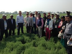 Legumes Travelling Workshop for South Asia, February 2015 (ICARDA-Science for Better Livelihoods in Dry Areas) Tags: nepal india afghanistan healthy bhutan farmers seeds soil february bangladesh pulses lentils legumes nutrition westbengal agronomy 2015 incomes grasspea improvedvarieties farmerfielddays ricefallows