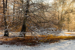 Winter autumn mix (mike.saupe78) Tags: autumn winter shadow red orange sun white snow cold t