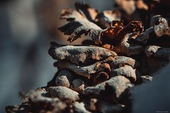 Fungi -Massapequa Nature Preserve (LauraJSwindle) Tags: trees usa ny macro texture nature botanical earth 85mm longisland fungi foliage textures growth fungus decaying macrophotography massapequa wantagh massapequapreserve treedecay nikond3100