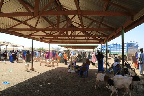 Centre of Burao Livestock Market in Low Season #Lowseason #Market #Burao #Livestock #Trade #Somaliland