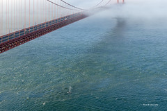 Whale (davidyuweb) Tags: bridge golden gate san francisco whale sfist luckysnapshot