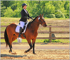 The Full Monty (Taking pics, and eventually posting them!!!) Tags: horse ontario canada canon eos equestrian dressage 70d efex 18135mmstm pspx8 paintshopprox8 orchardparkstables
