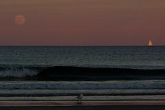2016-07-19 Moonrise at Beach (142) (Paul-W) Tags: ocean blue sunset sky seagulls water clouds sailboat sand surf waves purple wells moonrise sail ogunquit 2016 northogunquitbeach