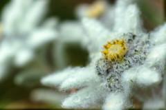 Un bel weekend lungo al Cugn di Goria (XXAquarius) Tags: cugn di goria nature natura alpi weekend passeggiate prati estate summer