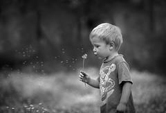 Be free and Fly!! (ksmpics) Tags: child childoutdoorportrait kspics naturallight blackandwhite dandelion nature