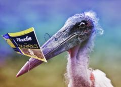 Philosopher (kunstschieter) Tags: bird book philosophie maraboe vogel filosofie boek