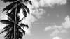 As Palmeiras na Terra do Pau Brasil (Centim) Tags: brasil br cidade estado país capital continentesulamericano américadosul foto fotografia natalrn riograndedonorte nordeste sonydsch9 h9 sony palmeiras pb pretoebranco