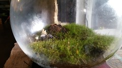 20160727_175148 (mobile_gnome) Tags: moss terrarium