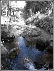 A la source (Malys_) Tags: eau cascade rivire arbre caillou pierre