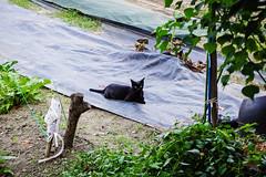 Today's Cat@2016-08-14 (masatsu) Tags: cat catspotting thebiggestgroupwithonlycats pentax mx1