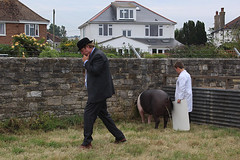 Melplash Show, August 2016 (Paul Russell99) Tags: judge judging pigs countryshow pissing urinating