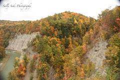 IMG_9168 (4) (Sally Knox Sakshaug) Tags: letchworth state park new york autumn fall bright sunshine grandcanyonoftheeast portagecanyon october outdoors nature scenic pretty beautiful calm peaceful serene leaf leaves orange yellow red brown tree trees bush forest woods wood bark log trunk rock rocks grey gray shale cliff mountain valley gorge ravine river genesee limestone