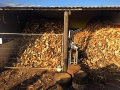 """@wardensfencing and Adam have been busy organising the log stores this afternoon. One bay full of seasoned logs ready for sale, the other full of freshly split timber ready for winter 2017! #wardenstreecare <a style=""""margin-left:10px; font-size:0.8em;"""" href=""""http://www.flickr.com/photos/137723818@N08/30465973622/"""" target=""""_blank"""">@flickr</a>"""