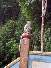 Temple of Lord  Morgan - Great Pato cave - Selangor – Malaysia - By Amgad Ellia 14 (Amgad Ellia) Tags: by temple great lord pato malaysia cave morgan amgad selangor ellia –
