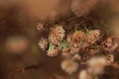 Winter Color (2bmolar) Tags: macro nature odc schuylkillcounty wintercolor macromavens