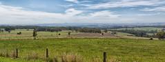Mountain View Rd pano (Thunder1203) Tags: panorama countryside victoria adobe photomerge mountainview gippsland australianscenery cs6 lr5 canon5dmkiii
