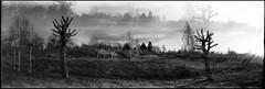 December Illusion (Foide) Tags: panorama panoramic pinhole 617 waitingfortherain pinholetree filmfilmforever f233 realitysosubtle rss141