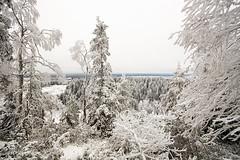 Koli - Finland (s.niemelainen) Tags: park winter snow nature forest trekking suomi finland landscape finnland hiking national lumi talvi maisema mets finlandia kansallispuisto luonto karjala lieksa pielinen winderness retkeily pohjois patikointi