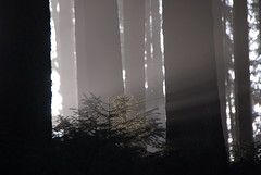 RU_201411_Promenade_012 (boleroplus) Tags: silhouette horizontal automne germany bergen brouillard deu forêt contrejour bavière