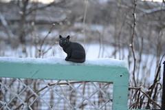 Cat figure (pe.kalina) Tags: cats animal cat figurines figure collecta