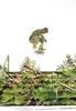 Flip al pasto (homeroprodan) Tags: naturaleza nature argentina grass stairs exposure double pasto skatepark flip skate skateboard misfotos escaleras sk8 exposicion doble cesped kickflip trelew patineta sktaeboarding
