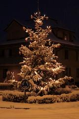 Weihnachtsbaum im Winterkleid mit Schnee in Ostermundigen bei Bern im Kanton Bern in der Schweiz (chrchr_75) Tags: christmas tree weihnachten de schweiz switzerland suisse swiss di christoph nol dezember svizzera weihnachtsbaum albero natale arbre kerstboom 2014 1412 suissa chrigu weihnachtsfest kantonbern chrchr hurni chrchr75 chriguhurni chriguhurnibluemailch