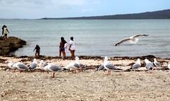 (aquepontochegamos) Tags: voyage trip travel viaje sea newzealand sunlight praia beach mar pacific auckland nz viagem voltaaomundo rtw pacifico oceania aquepontochegamos routetheworld